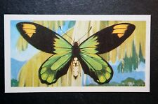 Queen Victoria's Birdwing     Tropical Butterfly  Illustrated Colour Card  VGC