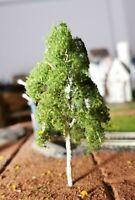 3 Birken, 100 mm, 10 cm hoch in Premium Qualität, jeder Baum ist ein Unikat