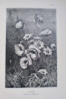Le fusain sans maître. traité pratique et complet sur l'étude du paysage 1889