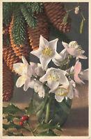 Postcard Hellborus niger