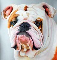 Ritratto portrait di BULL DOG (dog) - Matite colorate cm. 55 x 66