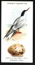 Ogden's British Birds and Their Eggs 1939 - Common Tern No. 43