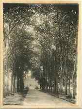 France, Château de Chenonceau, Allée des arbres  Vintage silver print.  Tirage