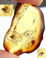 Natur Bernstein fossiler mit 2 Einschluss Insekten Sammlung neu W8001