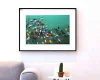 Watercolor Koi Fish Ponds • Japanese Carp • Asian Art • Wall Decor