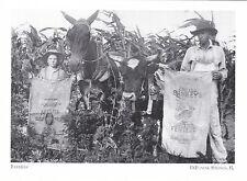 "+PC-Postcard-""Farmers/Father & Son"" w/Mule & Ox- /*DeFuniak Springs, FL/ (#190)"