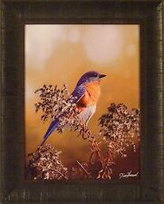 EASTERN BLUEBIRD by Jim Hansel 17x21 FRAMED PRINT PICTURE Song Bird Blue