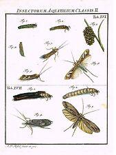 "Rosel's ""Insecten"" - Hand-Col Copper Eng - ""INSECTORUM AQUATILIOUM -XVI"" - 1740"