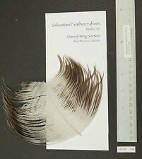 """3"""" Section of Natural Chinchilla Ostrich Wing Quill Fly Tying 4.5"""" Plumules"""