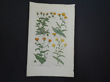 Sir John Hill, Botanical, The Vegetable System 1761-1775 Ox-Tongue #26