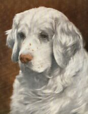 1930s Antique Clumber Spaniel Dog Print Sandringham Spark Clumber 3455-D