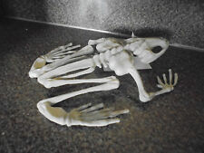 7 Inch Frog Toad Skeleton Fossil Prop Halloween Haunted House Graveyard Bones