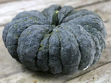 Pumpkin KANG KOB- Pumpkin Seeds- THAI FAVOURITE-12 SEEDS