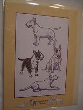 CARTE + ENVELOPPE - chien   BULL TERRIER