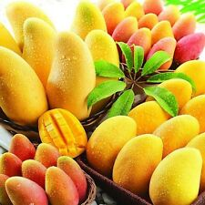 2 (ChinaTaiwan) Jinmang Fruit Seeds, Sweet And Delicious Fruits Home Gardening