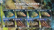 Montserrat 2016 MNH Nassau Grouper WWF 8v M/S Marine Fish Fishes Stamps