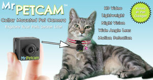 Mr Petcam HD - Collar Mounted Pet Camera - HD Video, Night Vision & More