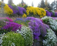 Rockery garden Mixed seed pack! a large variation of hardy alpine flowers!