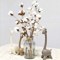 Naturally Dried Cotton Stems Artificial Flowers Filler Bouquet Home Decor Craft