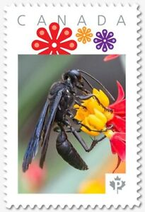 BLACK WASP = BEE = Picture Postage stamp MNH Canada 2018 [p18-07s21]