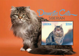 Liberia - 2014 - DOMESTIC CATS SIBERIAN - Souvenir Sheet - Stamp - MNH