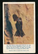 Birds SAND MARTIN Advert Nestles Milk 1915 PPC