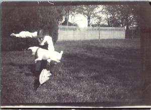 Le saut du chien dans un jardin  Vintage silver print Tirage argentique  6x8