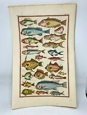 1718 Superbly Hand Colored Fish Print Jonston & Ruysch Engraving #12