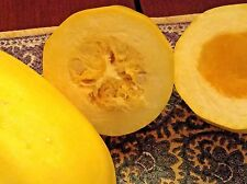 Large SPAGHETTI SQUASH organic seeds (9+). Unusual squash, easy to grow & cook!