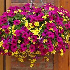 100 Mixed Petunia Seeds Heirloom Hanging Petunia Garden Flowers S048