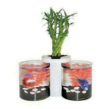 Two Betta Fish Cylinders and Planter Small Desktop Aquarium Fish Tank Set Up
