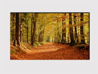 267 X LARGE CANVAS 18''x 32'' WALL ART AUTUMN FOREST AVENUE PRINT PICTURE
