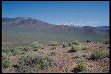 143059 Death Valley Wildrose A4 Photo Print