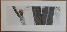Terry Isaac  In The Elm  Lt Ed Fine Art Wildlife Print Squirrel Snowy Tree S/N