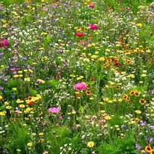 """Blumenwiese Mix Saat """" Bienenfreund """" 200 Samen für duftende Blumen"""