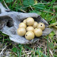 25 Perles bois vernies 20 mm +/-