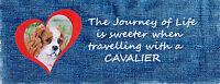 CAVALIER KING CHARLES SPANIEL BLENHEIM DOG CAR SEAT BELT PAD SANDRA COEN ARTIST