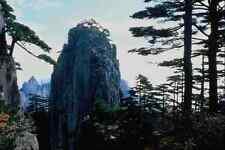 630076 Yu Sun Gong Pine Forest Huang Shan A4 Photo Print