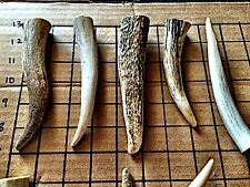 On SALE-10 Pounds Large Elk Antler Tips-Elk & Deer Antler Dog Chews-Great Deal!!