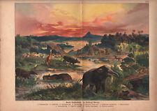 1878 lithographie originale animaux disparus éléphants rhinocéros gravure