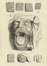 Face and Mouth, De Humani Corporis, 1685, Govert Bidloo, Anatomy Poster