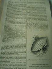 Bateau avec roues à palettes 1846 Gravure Print Article
