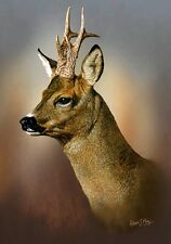 Roe Deer Limited Edition Print by Robert J. May