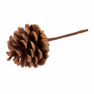Natural Pinecone on Stick - Single Stem