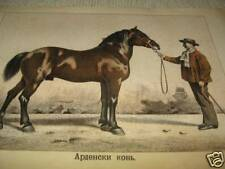 Antique Litho Print Ardennes Horse Breed