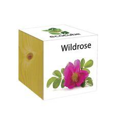 ecocube Holzwürfel - Wildrose