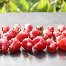 Snake Face rote Chilli mit außergewöhnlicher Fruchtform Chili mit Limonen-Aroma