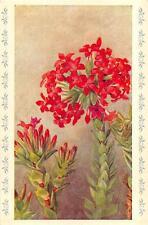 SCARLET CRASSULA FLOWER SOUTH AFRICA POSTCARD