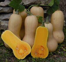 2g (approx. 10) winter squash seeds WALTHAM BUTTERNUT excellent winterkeeper