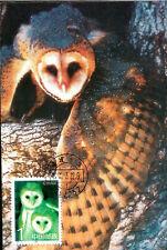 Birds African Grass Owl China Maximum Card Vogel